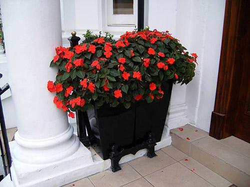 flores en las casas de londres