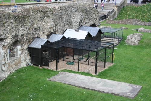 La leyenda de los cuervos de la Torre de Londres