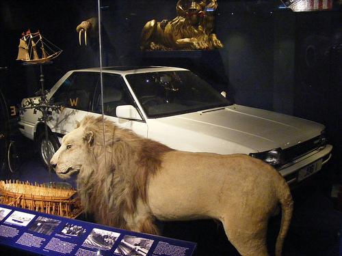 museo sunderland
