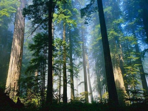 El Bosque de Dean