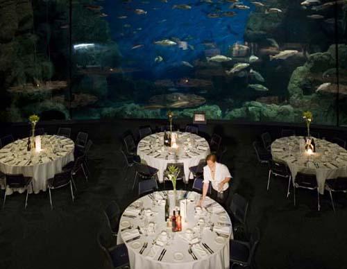 cena en acuario