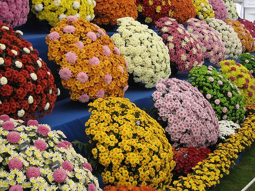 Flores en Chelsea