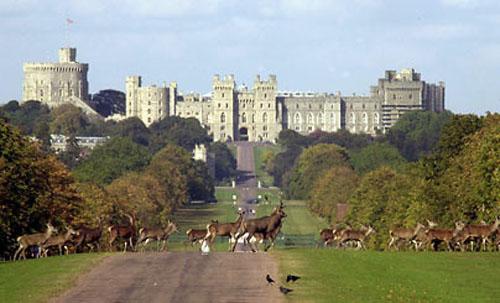 Pasear en carruaje por el Gran Parque Windsor